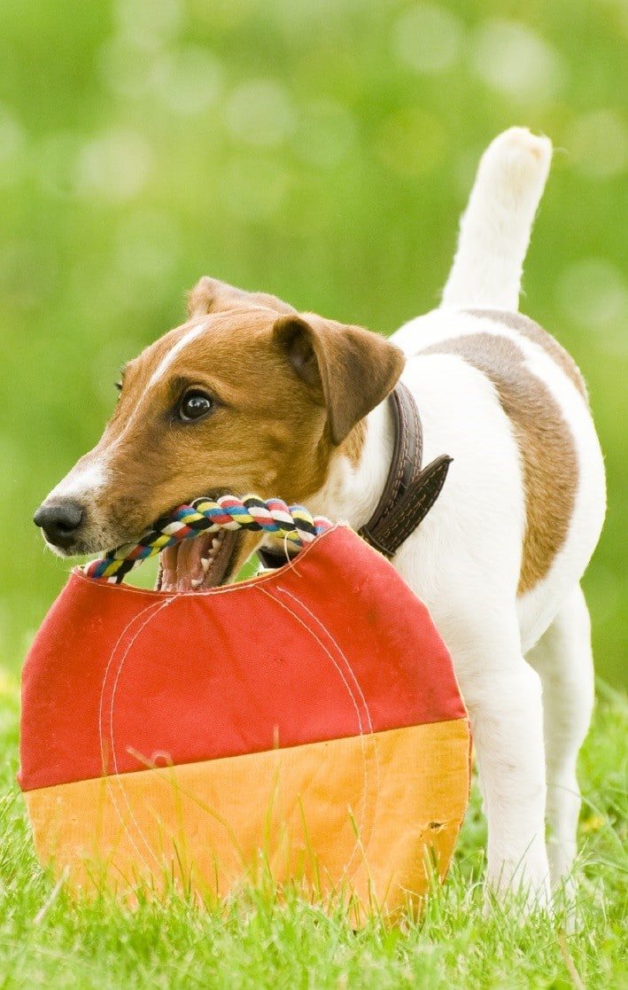Activity packages for pet boarding for Five star dog resort