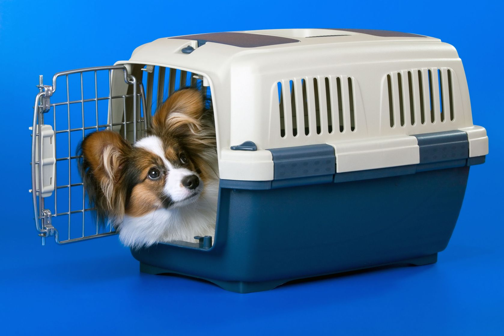 Crate training for Five star dog resort