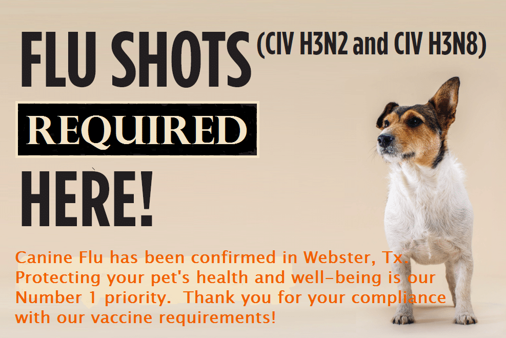 Canine flu requirements demand your attention fondren 5 for Five star dog resort